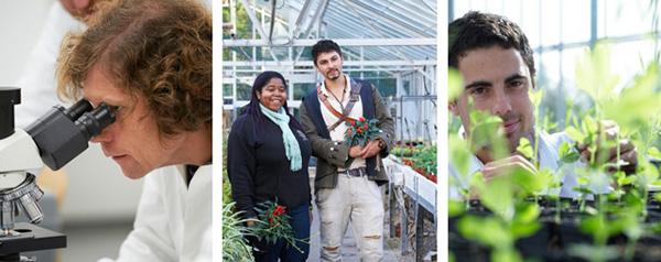 Undergraduate Horticulture Courses