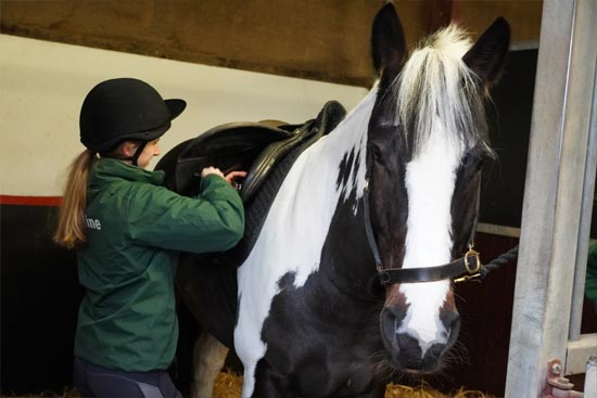 Equine Courses - 1:1 Telephone Session with an Academic