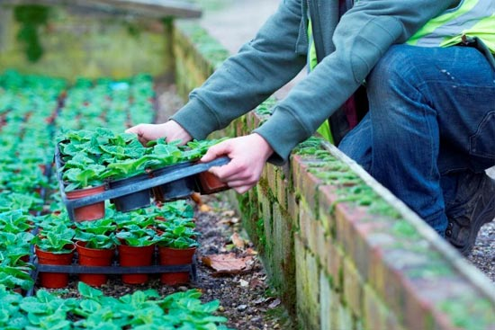 Horticulture Courses - 1:1 Telephone Session with an Academic