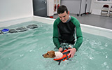 Hydropool - Canine Therapy Centre