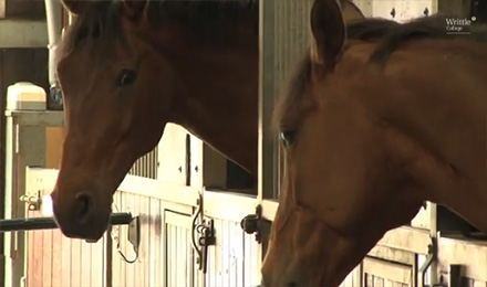 Writtle University College Further Education Equine Video
